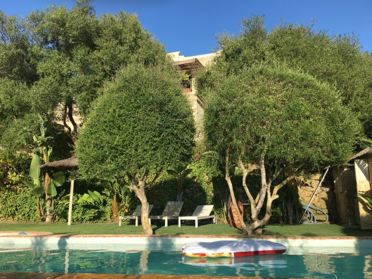 Garden-and-swimming-pool