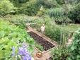 Vegetable gardens t Villa Barca
