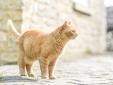 The Firs Bath Region boutique hotel besonders luxuriös aussergewöhnlich klein