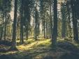 View Hotel Milla Montis