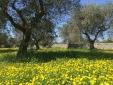I nostri ulivi - belvedere camera matrimoniale in trullo - Trullo dell'ulivo